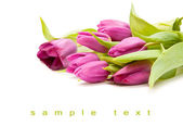 Isolated bouqet of purple tulip — Stock Photo
