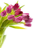 Pulip in a vase — Stock Photo