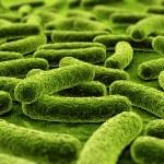 Bacteria — Stock Photo #8282354