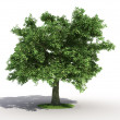 Oak tree — Stock Photo #8282619