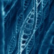 DNA strands — Stock Photo