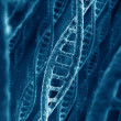 DNA-strengen — Stockfoto