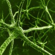 Stock Photo: Neurons