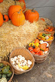 Bushel baskets of gourds and squash — Stock Photo