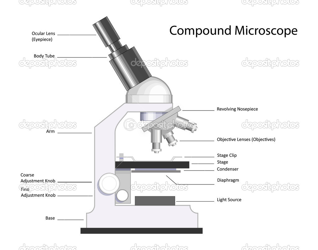 MICROSCOPE WITH LABELED PARTS « Optics & Binoculars