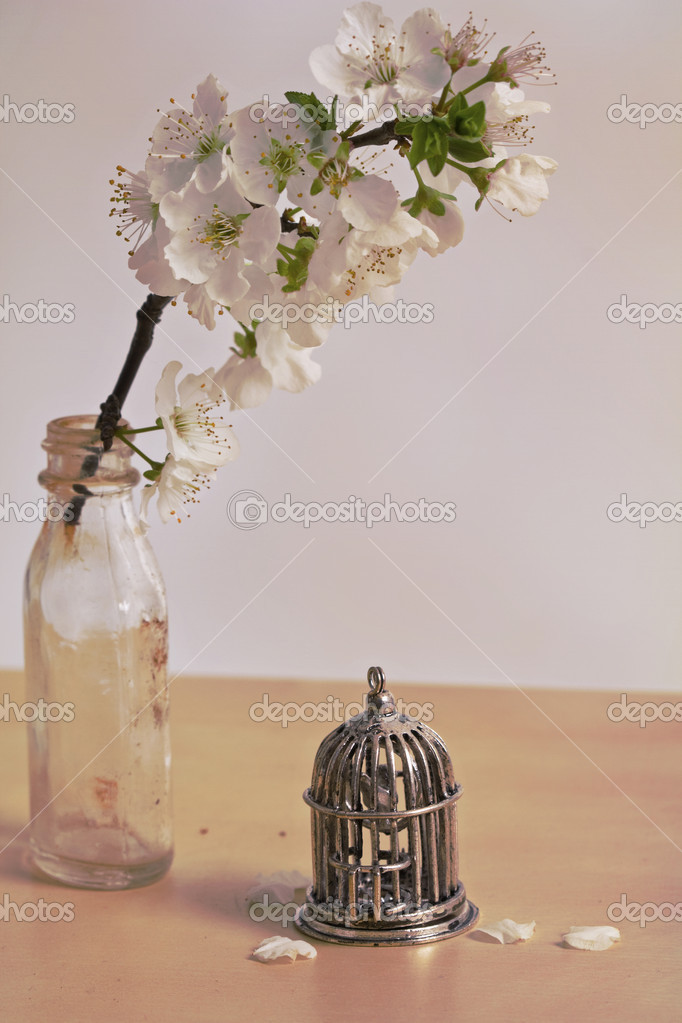 A twig of blossoms and bird cage on a table- Still life — Stock Photo #8762212