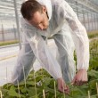 Working in a greenhouse with plants. — Stock Photo