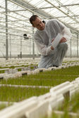 Greenhouse with plants. — Stock Photo