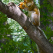 Stock Photo: Squirrel in a tree