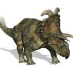 Альбертацератопс динозавров — Стоковое фото
