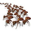 Army of Ants - Stock Photo