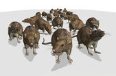 Army of Rats — Stock Photo