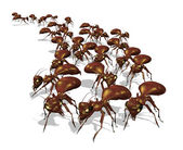 Army of Ants — Stock Photo