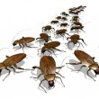 Cockroach Invasion - Stock Photo