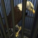 демократия в Америке: лишение свободы нации — Стоковое фото
