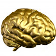 Golden Brain - Stock Photo