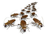 Cockroach Invasion — Stock Photo