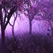 Lavender Forest - Stock Photo