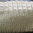 Albino Crocodile Skin — Stock Photo