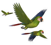 Military Macaws — Stock Photo