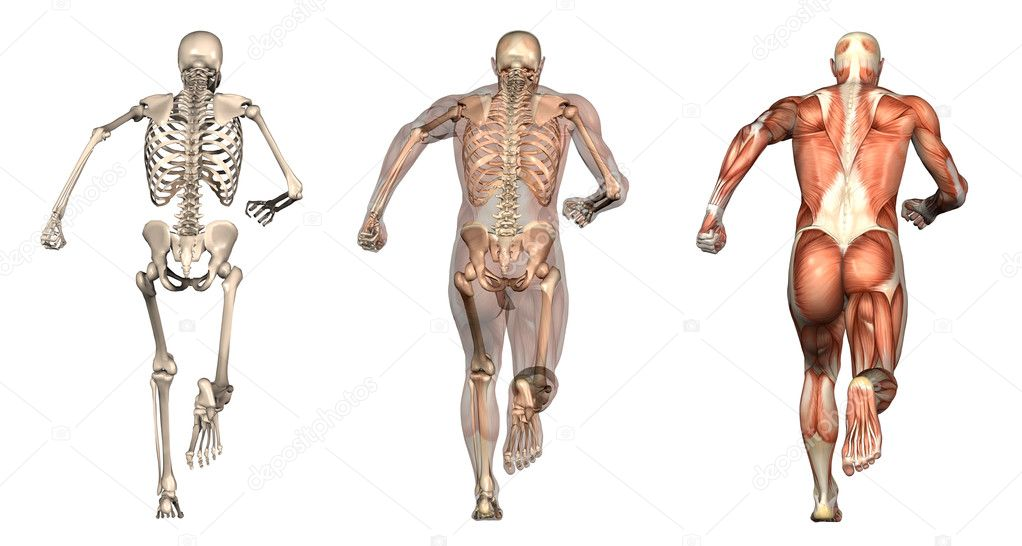 Lower back bones anatomy