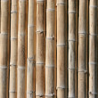 Bamboo  2 - Stock Photo