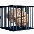 Brain in a Cage - Stock Photo