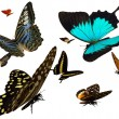 Butterflies — Stock Photo #8295330