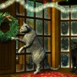 Christmas Cats in Holiday Window - Stock Photo