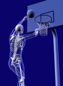 Basketball Anatomy — Stock Photo