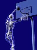 Basketball Anatomy — Stock fotografie