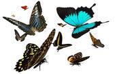 Motyle — Zdjęcie stockowe