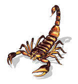 Glossy Scorpion — Stock Photo