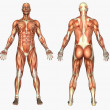 Male Muscles — Stock Photo #8301311