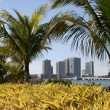 Stock Photo: Miami Hotels through Palms