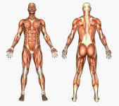 Male Muscles — Stock Photo