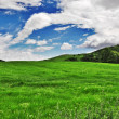 Green field with cloudy sky — Stock Photo