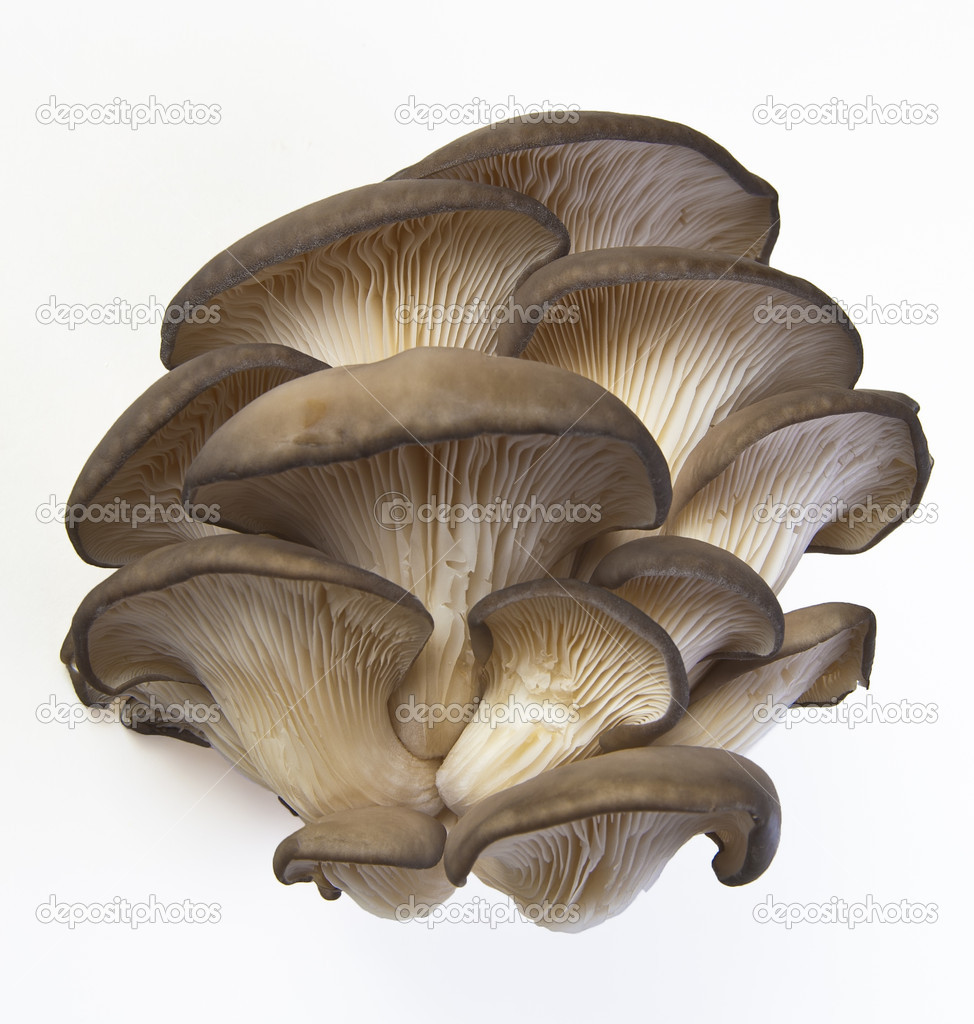 Oyster mushrooms on a white background. — Stock Photo #8888888