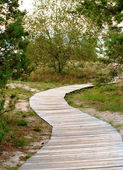 Path to the beach — Stock Photo