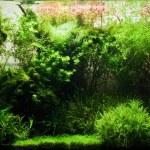 Acuario de agua dulce — Foto de Stock