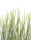 Grass bunch — Stock Photo