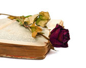 Old book and rose — Stock fotografie