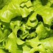 Fresh lettuce set - Stock Photo