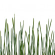 Early grass — Foto Stock