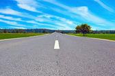 Route dans le champ — Photo