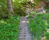 Escaleras en bosque — Foto de Stock