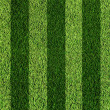 Stockfoto: Football grass