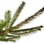 futro drzewa — Zdjęcie stockowe