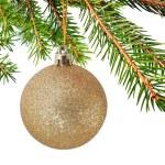 galho de árvore de peles — Foto Stock