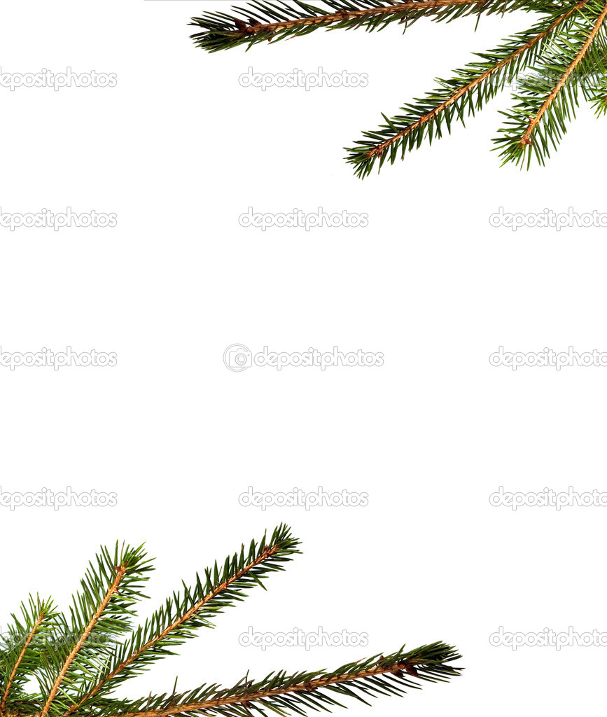 Fur tree brunch for background — Stock Photo #8331643